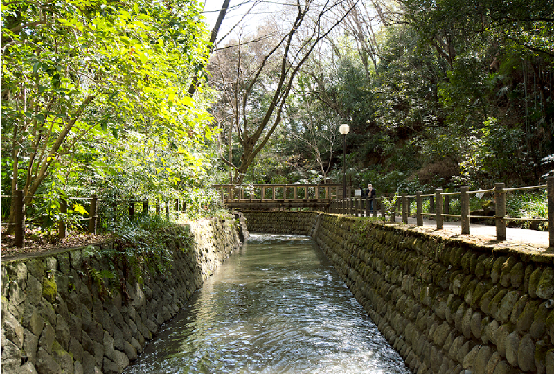 目の前を流れる丸子川