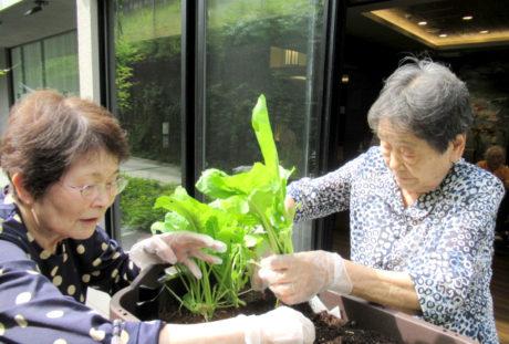 ベジトラグ゙菜園