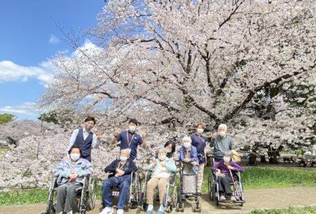 砧公園 花見①